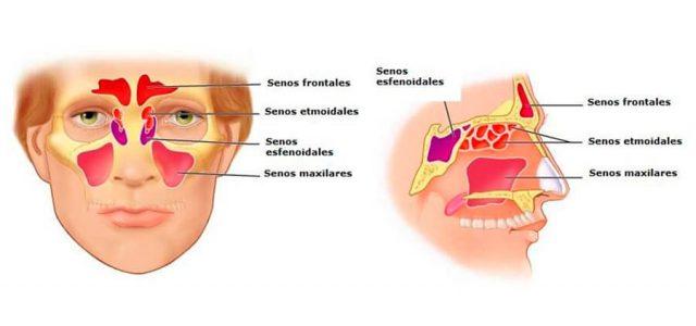 Tenemos 8 cavidades nasales
