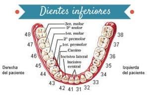 dientes inferiores