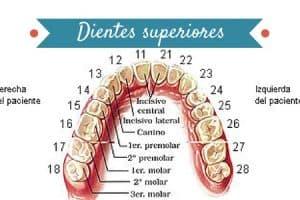 dientes superiores