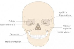Maxilar superior y mandíbula